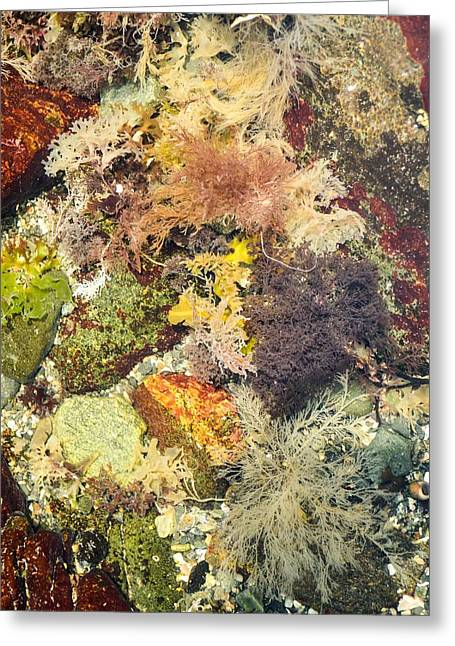 Tidal Pool Color Greeting Card