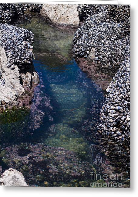 Tidal Pool Greeting Card by Mandy Judson