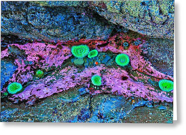 Tide Pool Anemones Greeting Card
