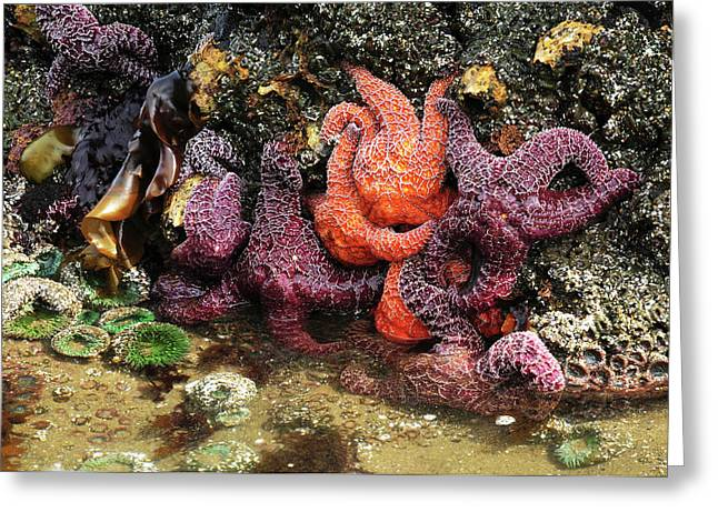 Tide Pool, Starfish And Sea Anemone Greeting Card by Michel Hersen
