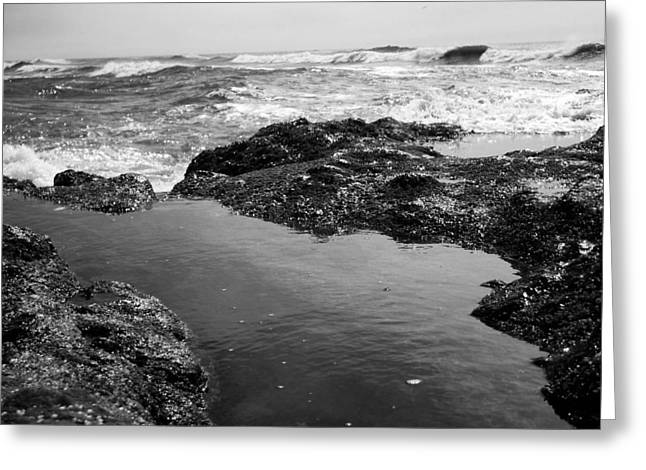 Tide Pool Greeting Card by Tarey Potter