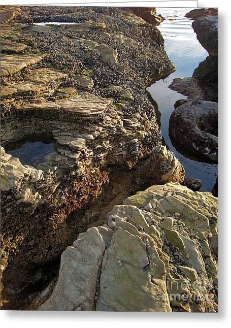 Tide Pools - 02 Greeting Card by Gregory Dyer