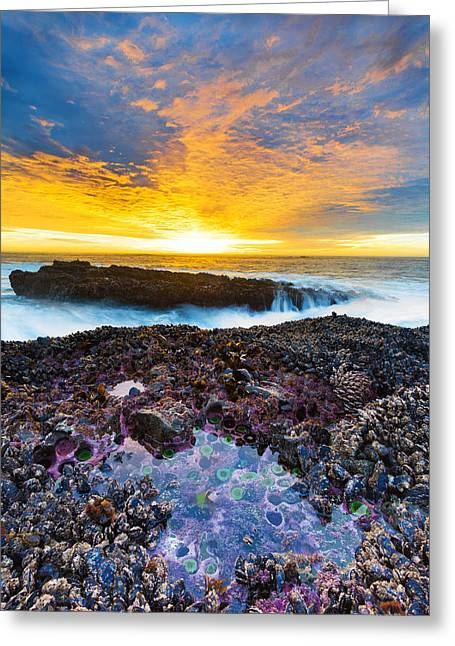 Tidepool Greeting Card by Robert Bynum