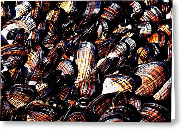 Tidewater Mussels Greeting Card