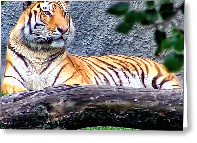 Greeting Card featuring the photograph Tiger 1 by Dawn Eshelman