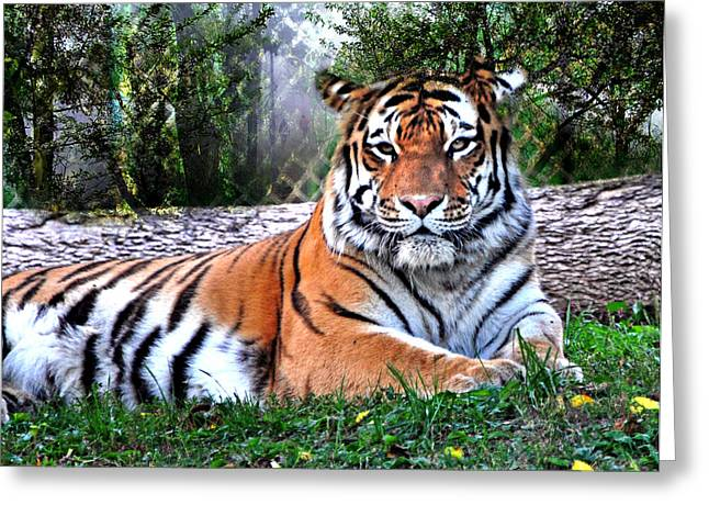 Greeting Card featuring the photograph Tiger 2 by Marty Koch