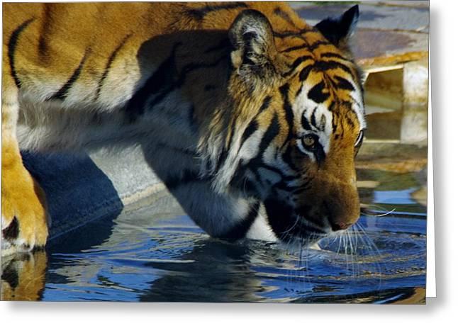 Tiger 2 Greeting Card