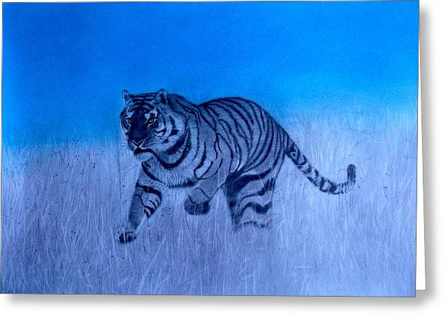 Tiger And Blue Sky Greeting Card
