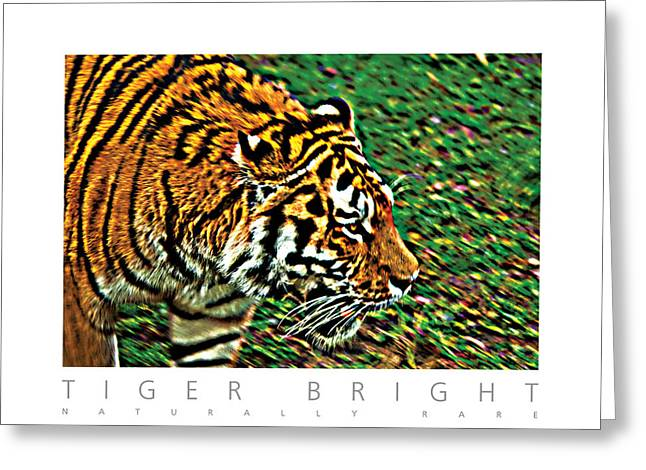 Greeting Card featuring the photograph Tiger Bright  Naturally Rare Poster by David Davies