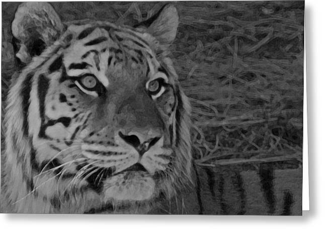 Tiger Bw Greeting Card by Ernie Echols