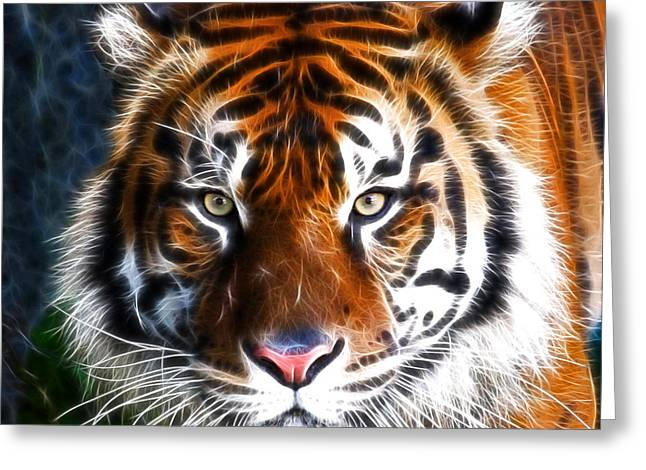 Tiger Close Up Greeting Card by Steve McKinzie