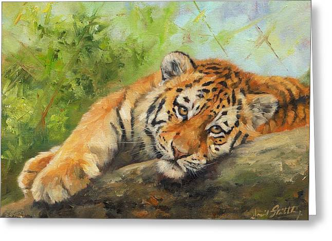 Tiger Cub Resting Greeting Card by David Stribbling
