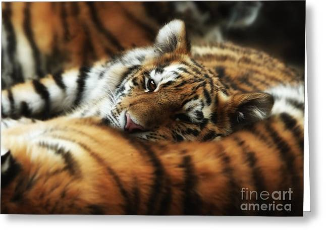 Tiger Cub Resting On Mom's Back Greeting Card