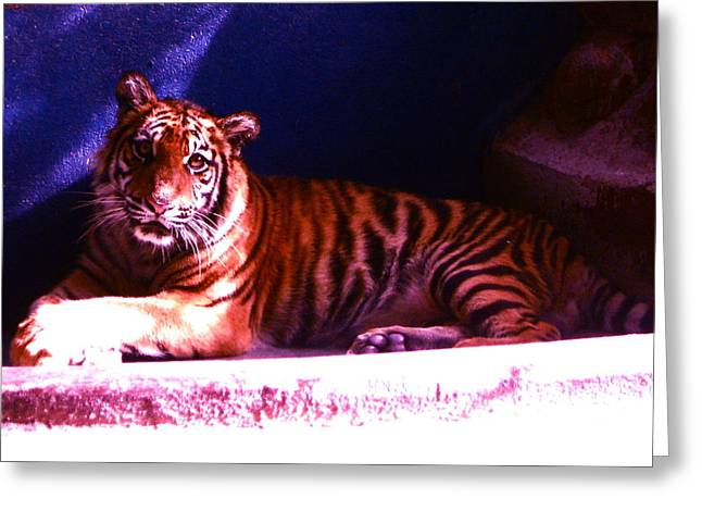 Greeting Card featuring the photograph Tiger Cub by Victoria Lakes