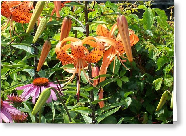 Tiger Lilies Greeting Card by Catherine Gagne