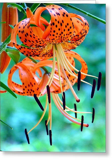 Tiger Lillies 1 Greeting Card by B L Hickman