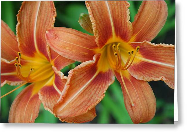Tiger Lily 3 Greeting Card by Jim Gillen