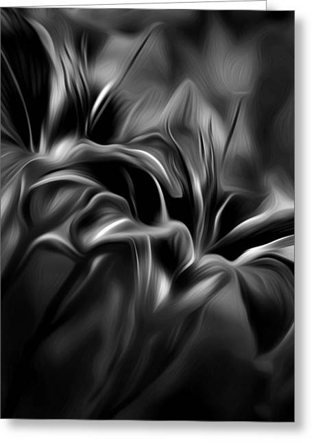 Tiger Lily Bw Greeting Card by Bill Wakeley