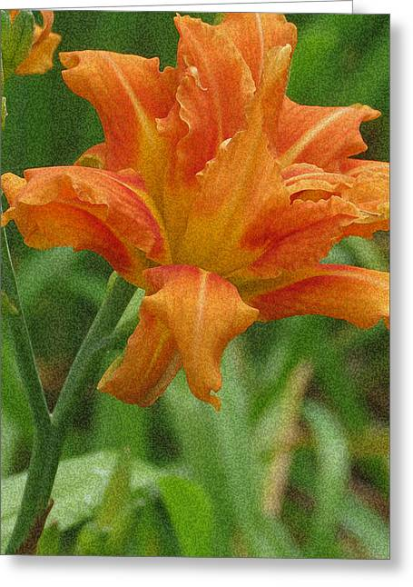 Tiger Lily Greeting Card by Kay Novy