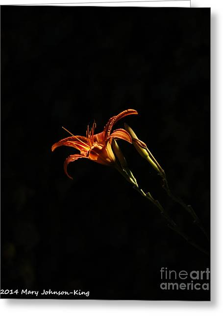 Tiger Lily On Black Greeting Card