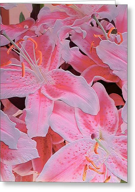 Tiger Lily Relief Greeting Card by Norman Hollands