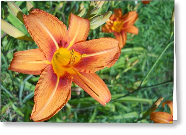 Tiger Lily Greeting Card by Yolanda Raker