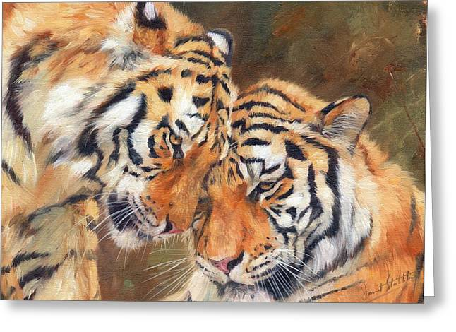 Tiger Love Greeting Card by David Stribbling