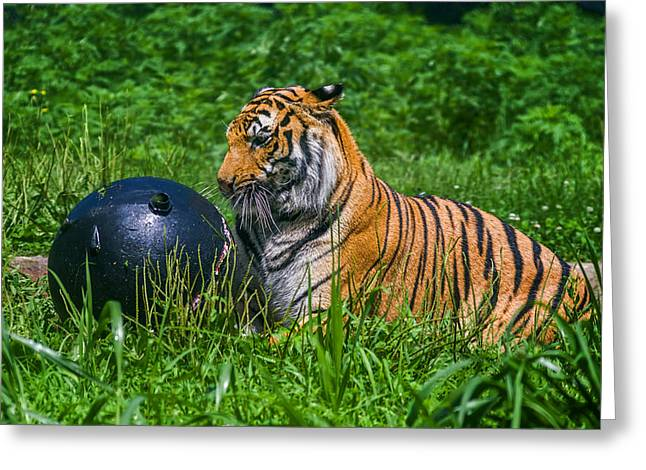 Tiger Playing With Ball Greeting Card