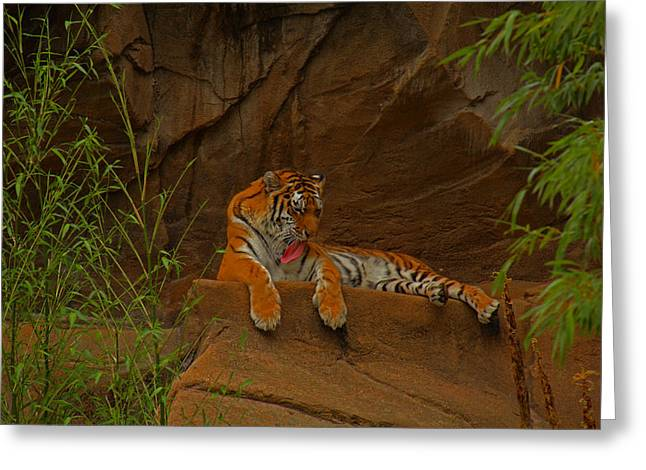 Greeting Card featuring the photograph Tiger Resting by Andy Lawless