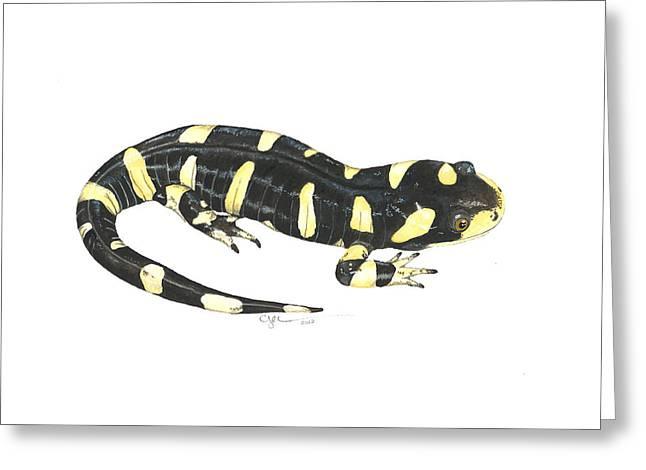 Tiger Salamander Greeting Card