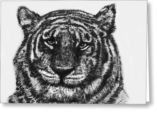 Tiger Greeting Card by Shabnam Nassir