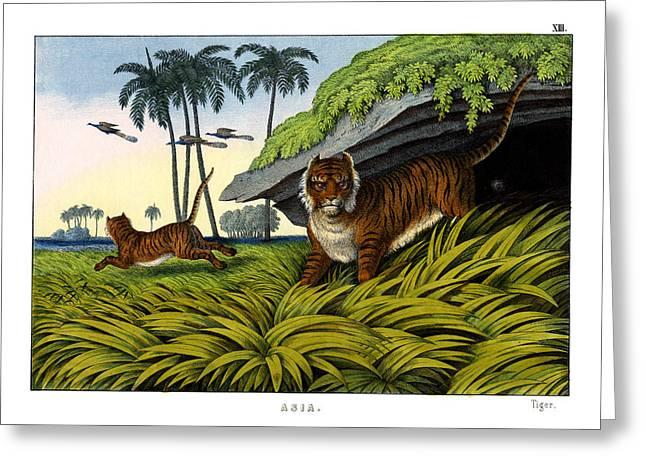 Tiger Greeting Card by Splendid Art Prints