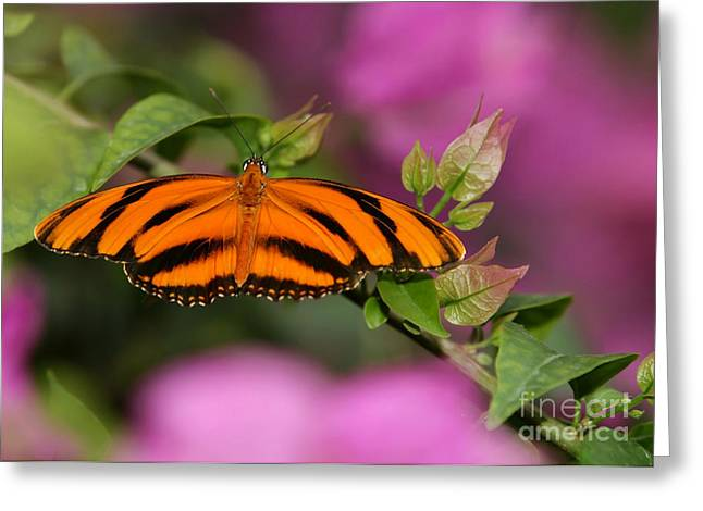 Tiger Stripe Butterfly Greeting Card by Sabrina L Ryan