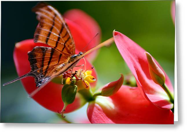 Tiger Stripped Butterfly Greeting Card