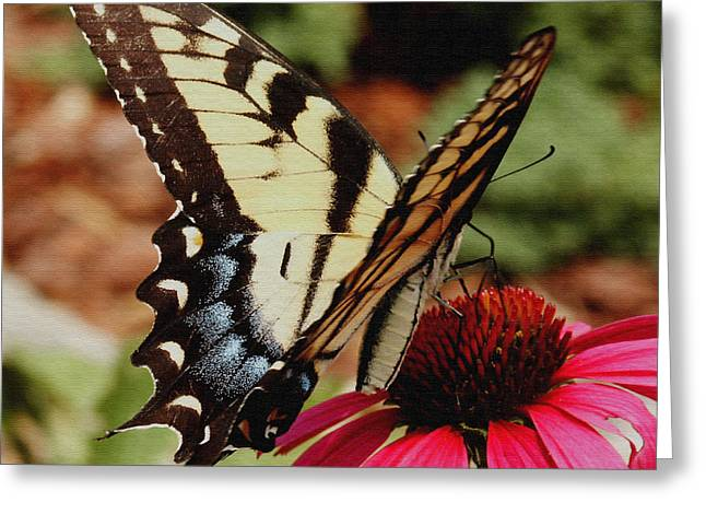 Greeting Card featuring the photograph Tiger Swallowtail  by James C Thomas