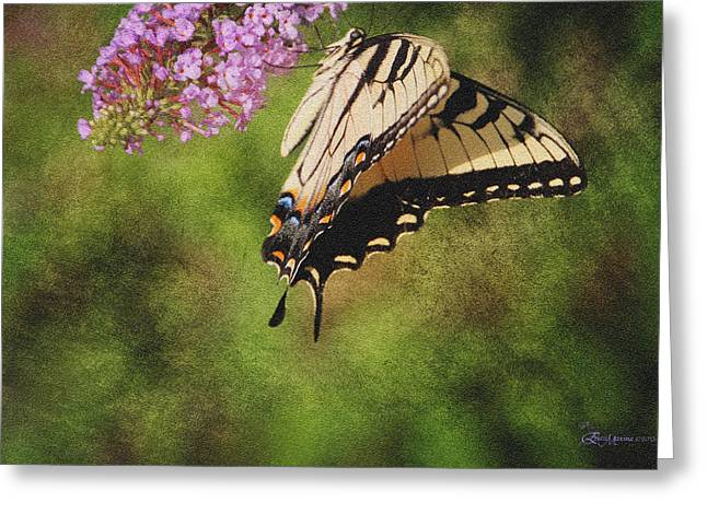 Tiger Swallowtail-featured In Photography And Textures And Harmony-happiness Groups Greeting Card by EricaMaxine  Price