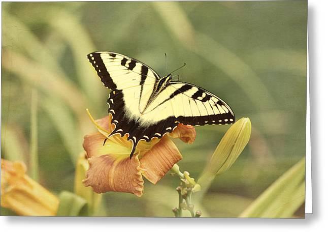 Tiger Swallowtail Greeting Card by Kim Hojnacki