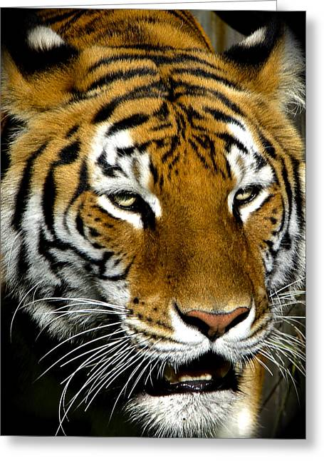 Tiger Tiger Burning Bright Greeting Card