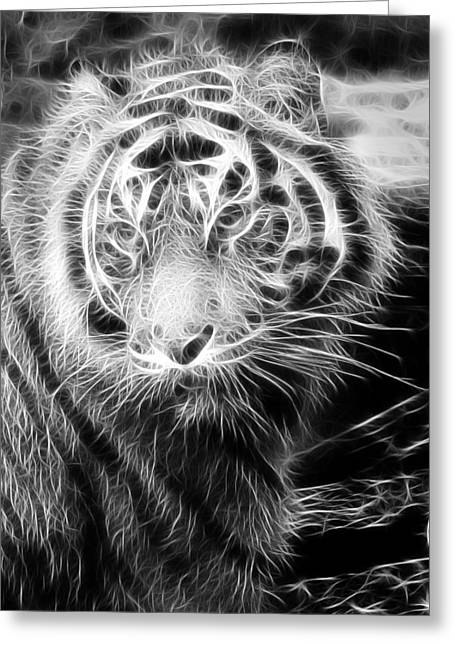 Tiger Tiger Greeting Card by Mark Kember