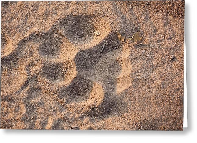 Tiger Track, Bandhavgarh National Park Greeting Card by Art Wolfe