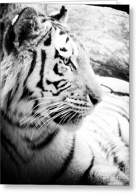 Greeting Card featuring the photograph Tiger Watch by Erika Weber