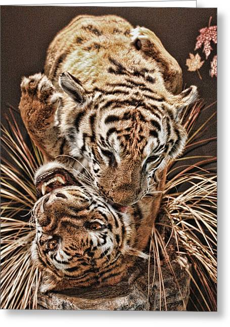 Greeting Card featuring the photograph Tigers by Angel Jesus De la Fuente
