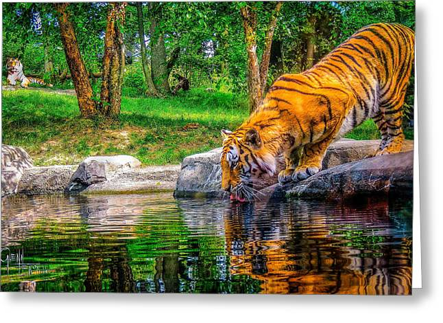 Tigers Pond Greeting Card by Glenn Feron