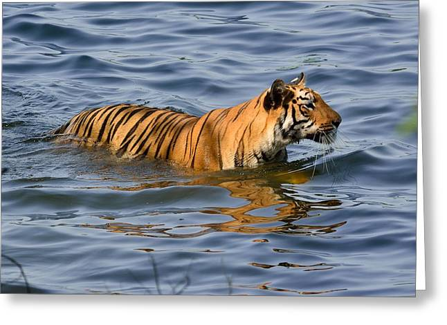 Tigress Of The Lake Greeting Card