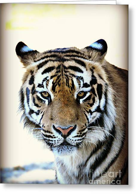 Tigris Greeting Card