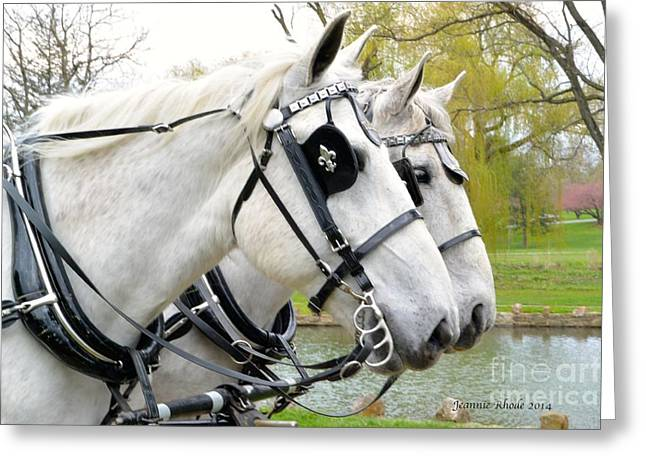 Greeting Card featuring the photograph Tillie And Bruce #2 by Jeannie Rhode