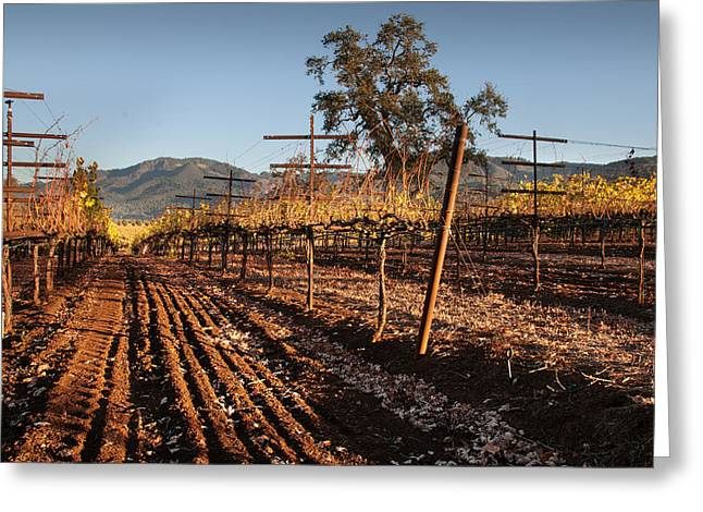 Tilling The Vineyards Greeting Card by Kent Sorensen
