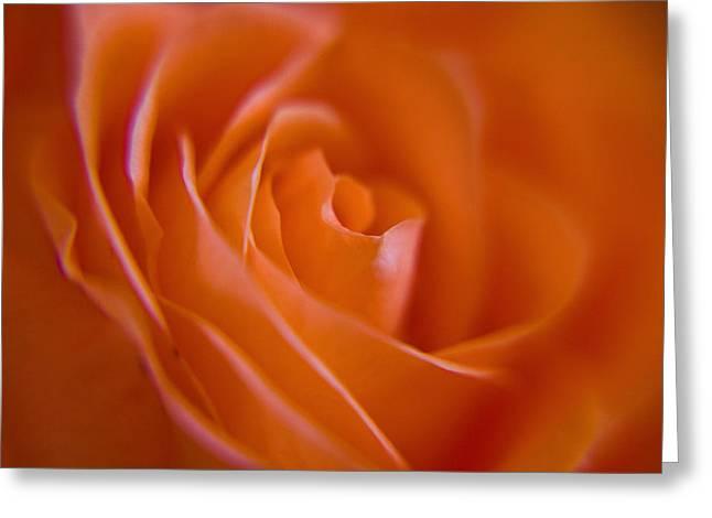 Tilted Rose Greeting Card by Kim Lagerhem
