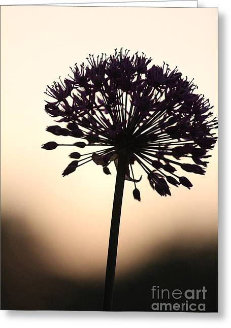 Tilted Silhouette Allium Greeting Card