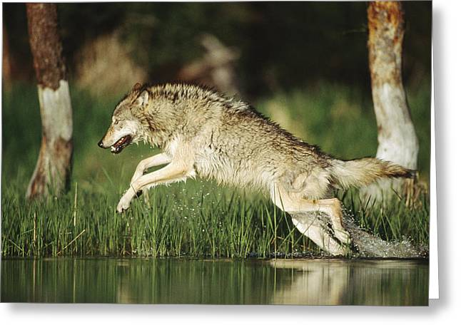 Timber Running Through Water Greeting Card